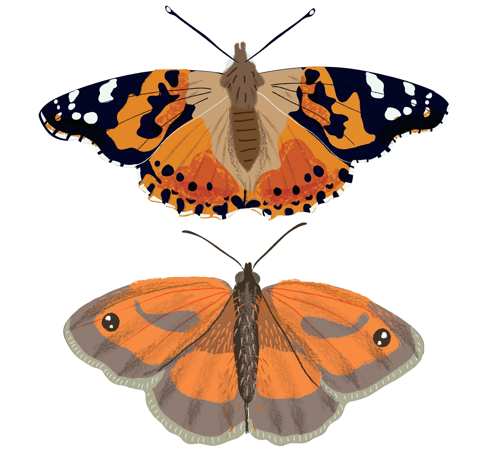 Some butterflies for Nature Month by Month by Elly Jahnz